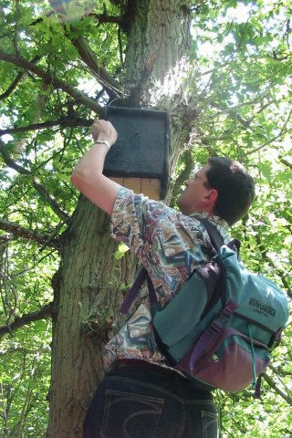 Bat Box Checking